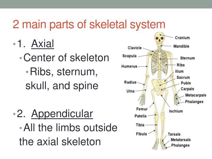 Ppt Skeletal System Powerpoint Presentation Id2201533