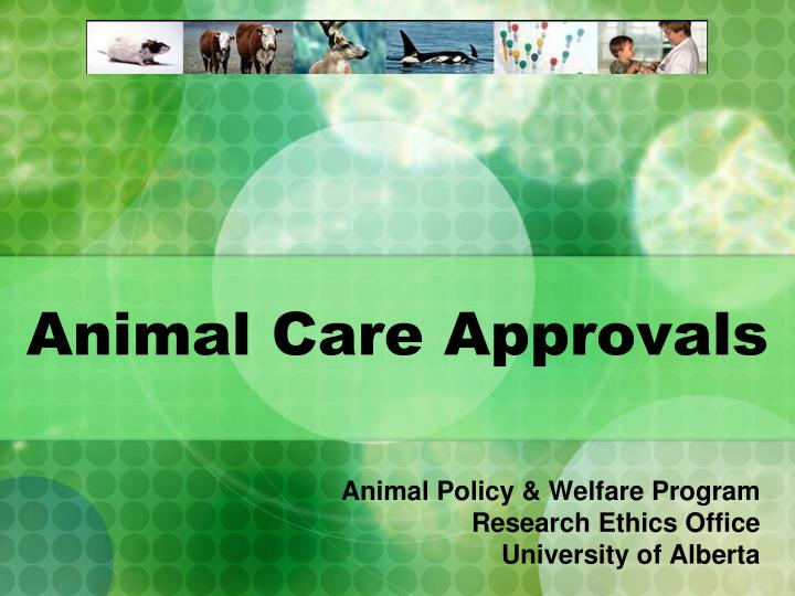 animal care approvals n.