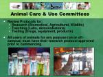 animal care use committees