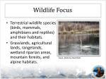 wildlife focus