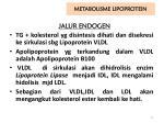metabolisme lipoprotein1