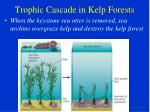trophic cascade in kelp forests