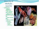 diversity of mollusks cont d1