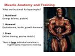 muscle anatomy and training