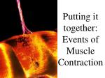 putting it together events of muscle contraction