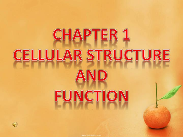 chapter 1 cellular structure and function n.