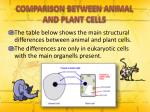 comparison between animal and plant cells