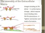 the assembly of the extracellular matrix