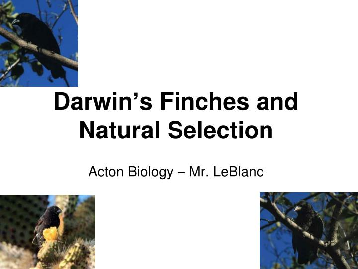 darwin s finches and natural selection n.