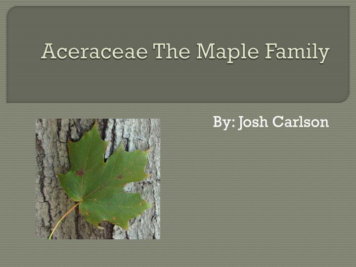 aceraceae the maple family n.