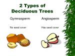 2 types of deciduous trees