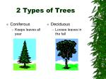 2 types of trees