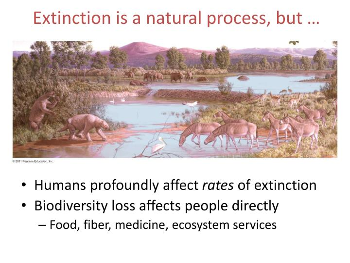 Extinction is a natural process, but …