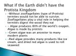 what if the earth didn t have the protista kingdom