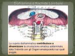 diaframma e rachide lombare