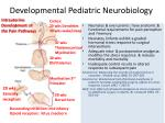 developmental pediatric neurobiology