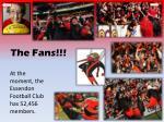 the fans