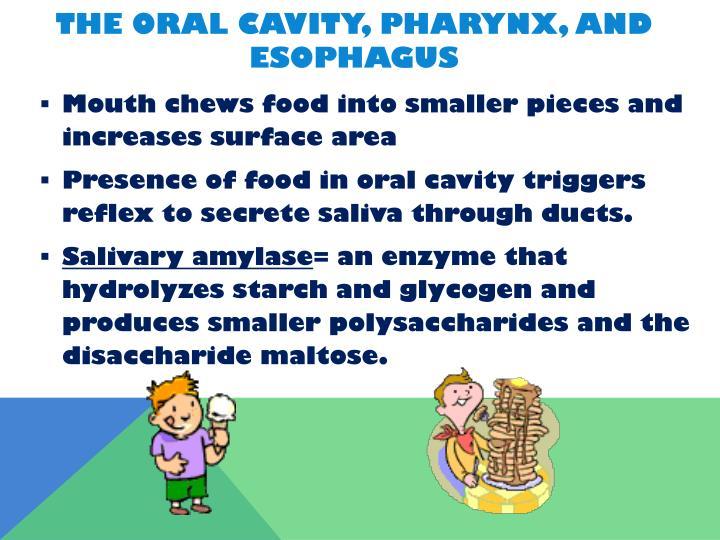 The Oral Cavity, Pharynx, and Esophagus