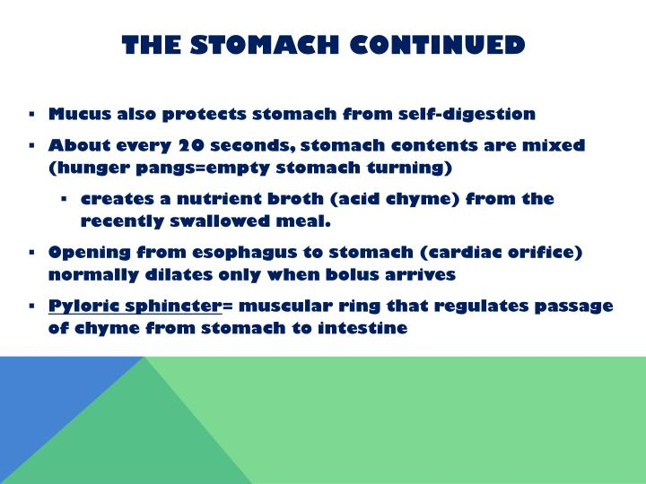 The Stomach Continued