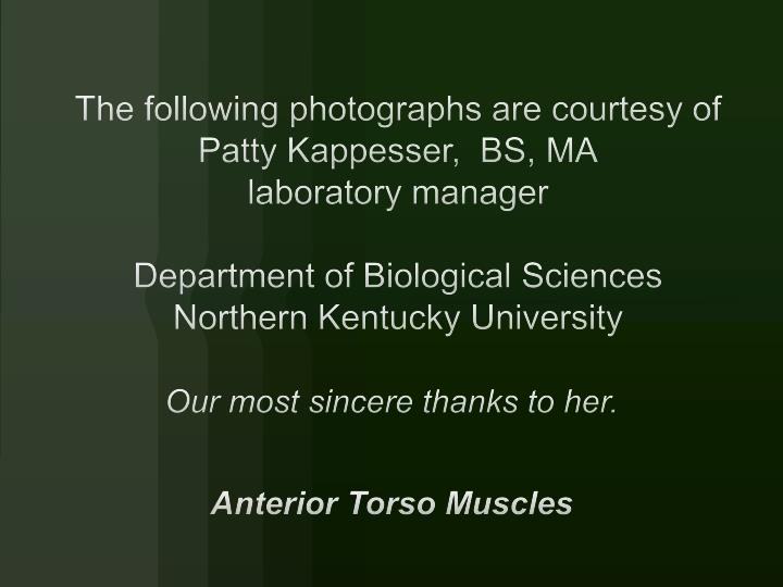 our most sincere thanks to her anterior torso muscles n.
