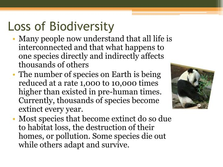 loss of biodiversity essay Species loss changes the most important processes of the ecosystem,productivity and sustainabilitybiodiversity loss quickens this alteration of the ecosystem.