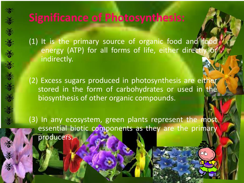 PPT - PHOTOSYNTHESIS PowerPoint Presentation, free download - ID:2204306