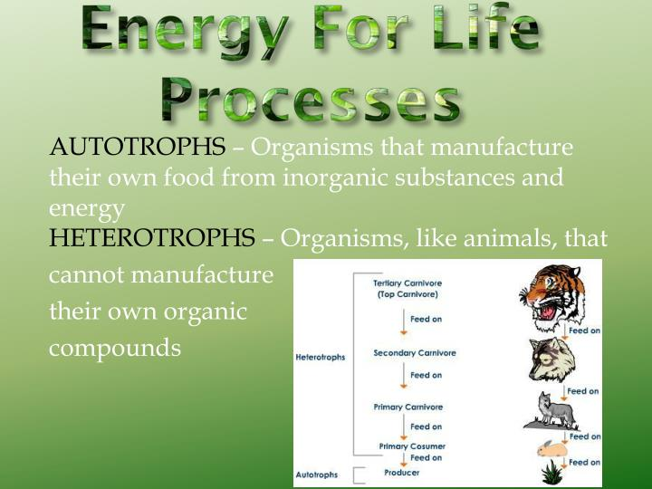 Energy for life processes