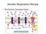 aerobic respiration review1