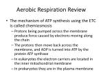 aerobic respiration review2