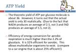 atp yield
