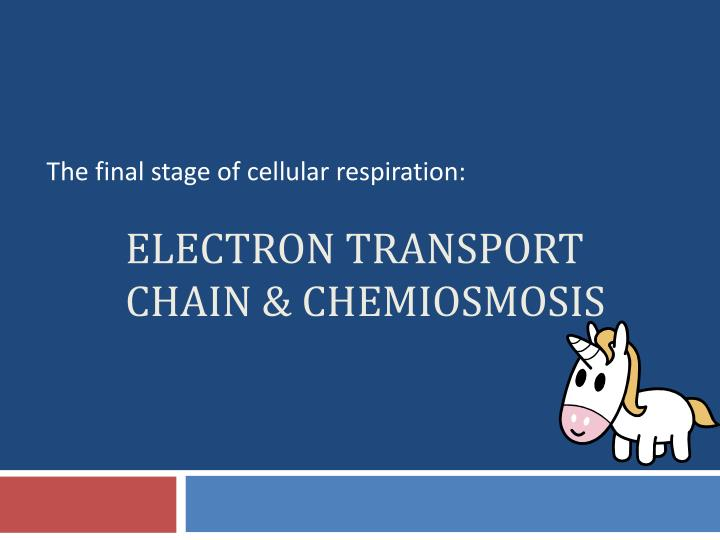 electron transport chain chemiosmosis n.