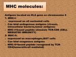 mhc molecules