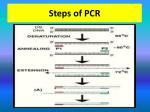 steps of pcr