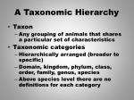 a taxonomic hierarchy