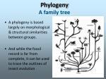 phylogeny a family tree