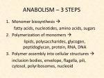 anabolism 3 steps