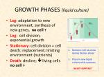 growth phases liquid culture2
