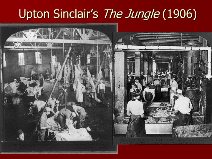 immigrants in upton sinclair s the jungle Upton sinclair, a socialist and muckraking journalist, wrote the jungle in 1906 as an expose of the horrific working conditions of immigrants in the chicago meatpacking industry of the time the.