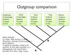 outgroup comparison1