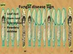 fungal disease sign