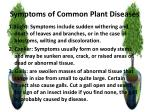 symptoms of common plant diseases