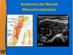 anatomia del nervio musculocutaneous