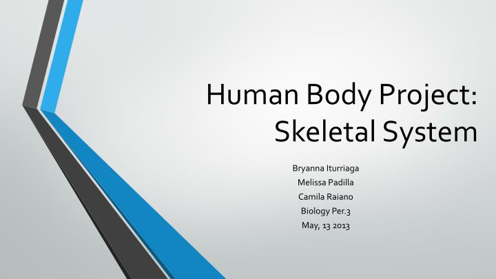 human body project skeletal system n.