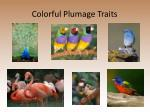 colorful plumage traits