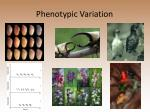 phenotypic variation
