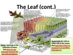 the leaf cont