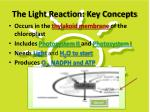the light reaction key concepts