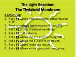 the light reaction the thylakoid membrane1