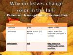 why do leaves change color in the fall1