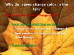 why do leaves change color in the fall2